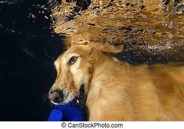 El perro buceando y mordiendo la pelota en la piscina, con vistas bajo el agua.