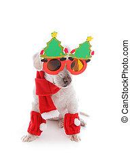 El perro celebra la Navidad