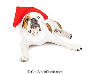 El perro de Papá Noel mirando hacia arriba