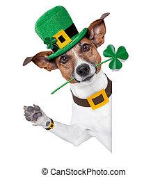 El perro de San Patrick