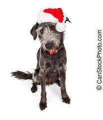 El perro de Santa Terrier mirando hacia abajo