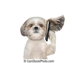El perro está hablando por teléfono
