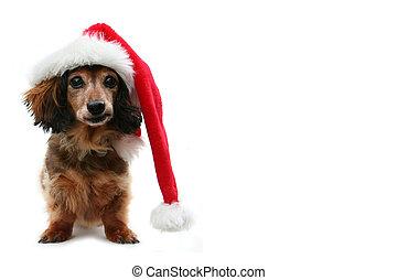 El perro salchicha de Navidad