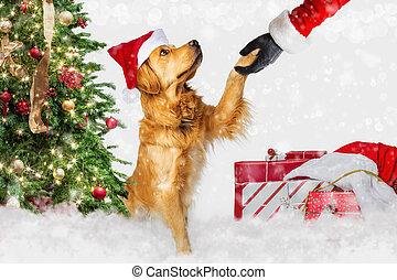 El perro se encuentra con Papá Noel en Navidad