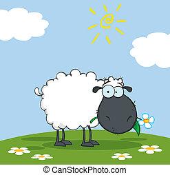 El personaje de las ovejas negras