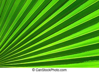 El primer plano de la hoja de palma de fondo abstracto verde