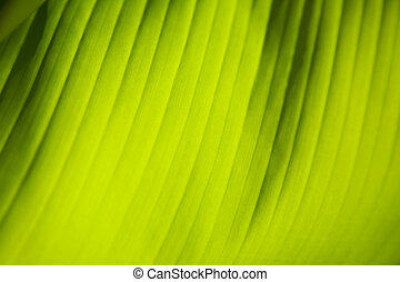 El primer plano de la hoja verde