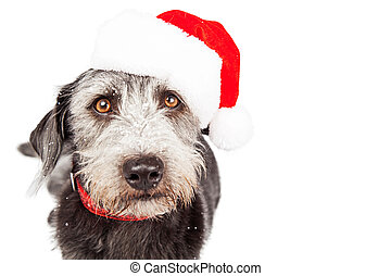 El primer plano de la navidad de Santa Claus