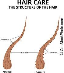 El primer plano del pelo