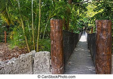 El puente de la selva