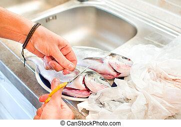 el quitar, aletas, pez, limpieza