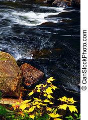 El río Forestal en otoño