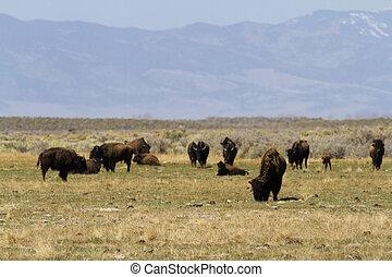 El rancho Buffalo