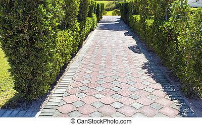 El sendero de los arbustos verdes