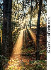 El sol brilla a través de la niebla nublada, el paisaje del bosque del otoño al amanecer