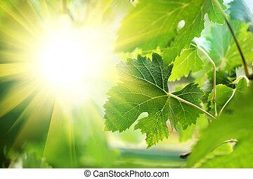 El sol brilla a través de las hojas