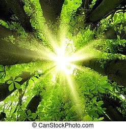 El sol brilla a través de los árboles