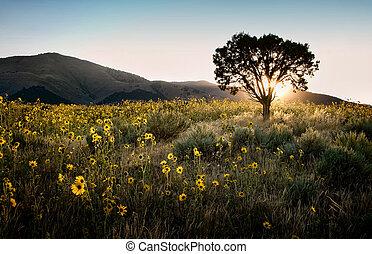 El sol brilla a través de un árbol con girasoles