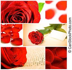 El valor de varias rosas rojas