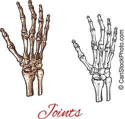 El vector dibuja icono de huesos de manos humanos o articulaciones