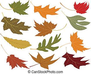 El viento sopla las hojas de otoño