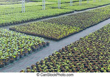El vivero de plantas de invernadero. Semillas de primavera, plantas jóvenes creciendo.
