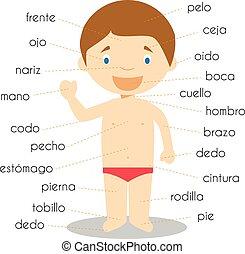 El vocabulario de partes humanas en la ilustración del Vector español