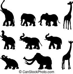elefantes, jirafa, mommoth