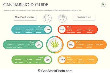 empresa / negocio, infographic, horizontal, guía, cannabinoid