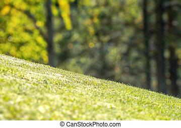 En el patio trasero con hierba verde vibrante