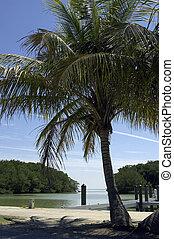 En Florida