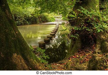 Encantada escena del bosque de flujo lento con reflejos vibrantes