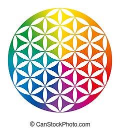 encima, coloreado, flor, blanco, vida, invertido, arco irirs