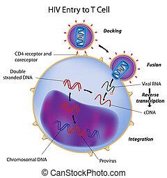 Entrada de VIH a la célula T