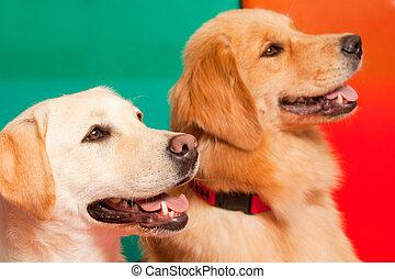 Entrenamos perros para terapia