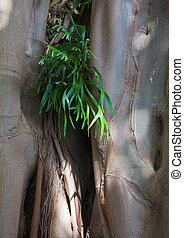 Epiphyte,