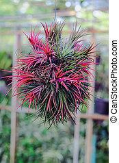 epiphyte, crecer, branch., airplant, tillandsia, o