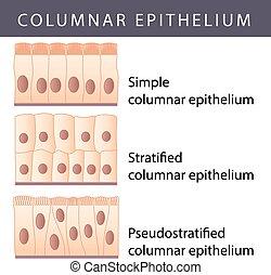 Epithelio