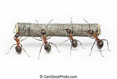 Equipo de hormigas trabajan con troncos, trabajo en equipo