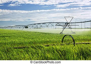 Equipo de riego en campo de cultivo
