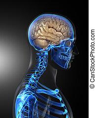 Escáner médico cerebral humano