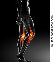 Escáner médico de rodilla humana