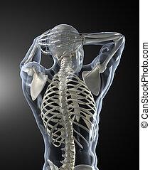 Escáner médico humano retrovisor