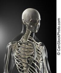 Escáner médico humano