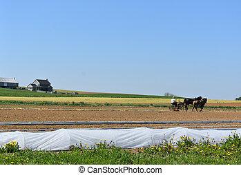 escénico, granja, condado, lancaster, amish, rural