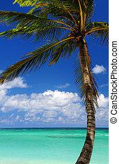 escénico, mar caribe, vista