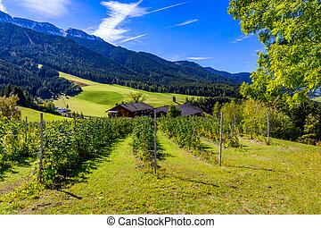 escénico, village., italy., granja, cielo, day., aldea, farmhouse., italia, rural, verano, azul, paisaje, campo