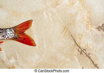 escalas, luz, aletas, fondo., cucaracha, limpiar, pez, rojo