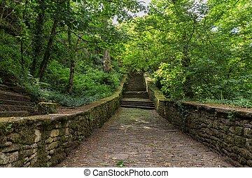 Escaleras que conducen al bosque verde