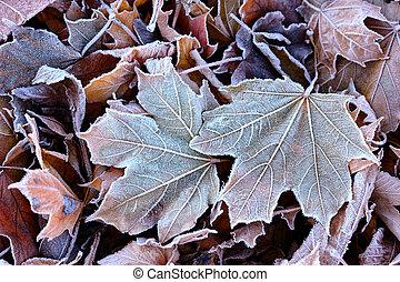 Escarcha en las hojas caídas